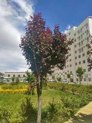 圣城锦苑绿化工程